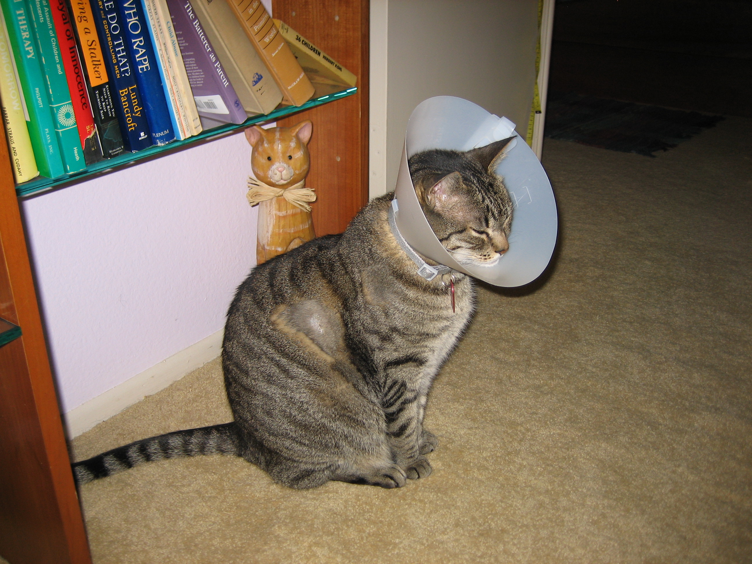 CANCER: MAST CELL TUMORS | Cat Authors
