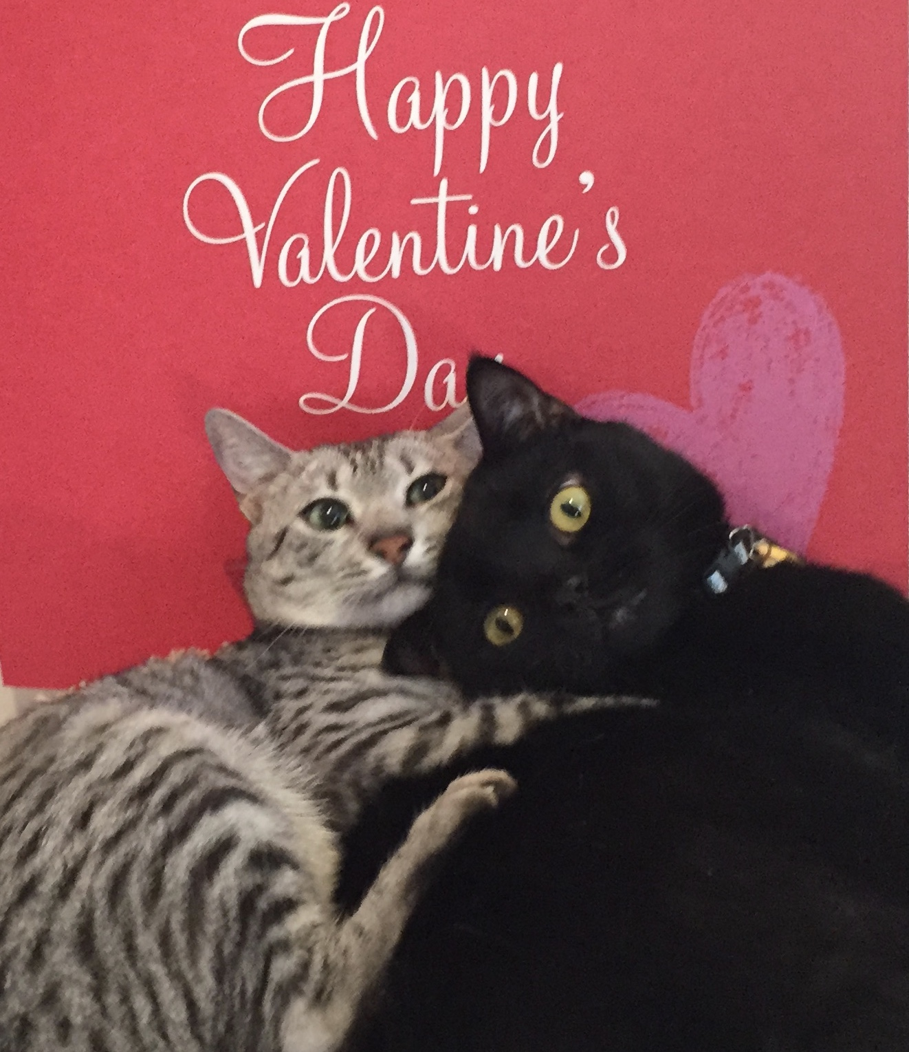 Catnip Toys For Valentine S Day : And a merry valentines day to all cat authors