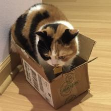Yep, I'm wearin' this box.