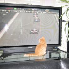 I love open wheel racing...well, NASCAR is ok too.