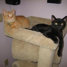 We are just hanging out....well, at least I am.  Do you know what my father's name is?  Kool Kat.  That's me right here.