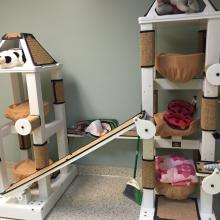 Cat trees/furniture by Crijo Pet Products at the Neely Center in Pasadena, CA
