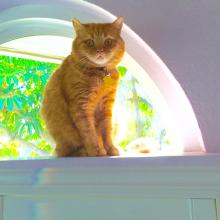 I watch everything and everyone from my cat walk.