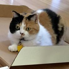 I love boxes.