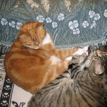 My big brothers, Tigger & Charlie Brown.  They aren't here anymore.