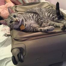 I'm helping Meowmuh pack for our vacation.