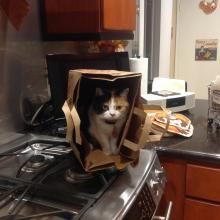 Meowmuh calls me her 'little helper.'  Here I am helping her unpack the groceries.