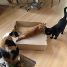 Get out of here, Inkee-Bear!  This box isn't big enough 4 all of us.