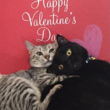 It isn't Merry Valentine's, it's Happy Valentine's?