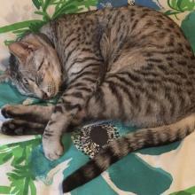 I am seriously asleep on Meowmuh's bed.