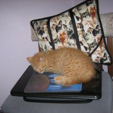 The mousepad on top of the notebook cat-puter is sooo soft!