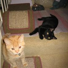We were just playing; Inkee-Bear didn't mean to cut my eye.