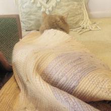 Gracee usually sleeps on TOP of the orange rug but sometimes, she sleeps UNDER it.