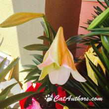 All parts of an Easter Lily are poisonous!