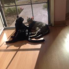 TRIPLE DUTY:  SUNNING, WATCHING & NAPPING