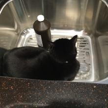 Catching a few zzzz's in the kit-chen sink.