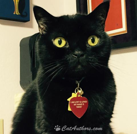 Black cats are the coolest