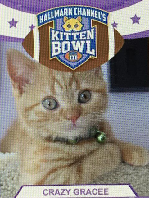 Can I play in Kitten Bowl III?