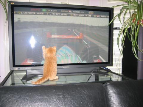 I can do it.  I can catch that car!  Just watch me.