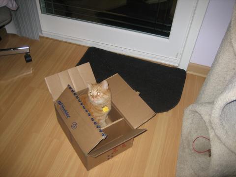 It is my feline duty to explore every box.