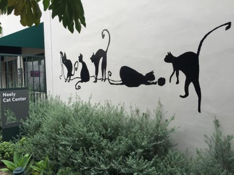 Meowmuh & Auntie Sharon visit the new Neely Cat Center in Pasadena, CA.