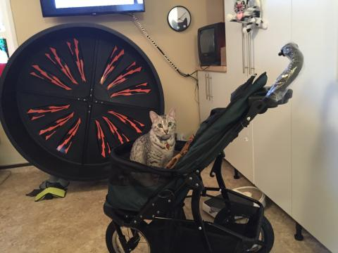 Spirit is ready to 'roll in the new PetGear Jogger Stroller.