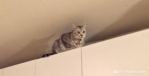 I scaled Mount White Cabinets and reached the summit!