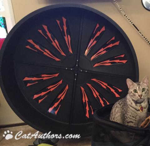 Gettin' ready to do my cardio on my exercise wheel.