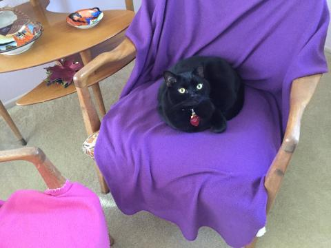 The purple cover is mine no matter which chair it is on.