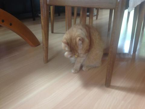 I groom after I eat, before AND after naps, after I am petted or held, when I am upset...