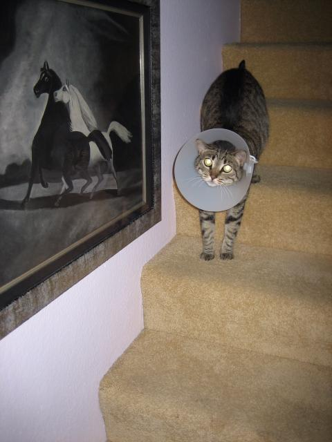 A NECK CONE DILEMMA:  STAIRS