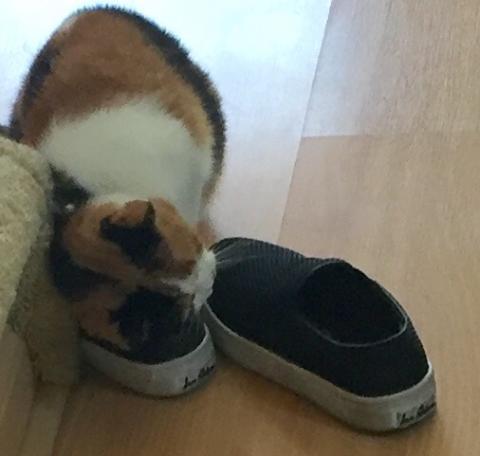 C me rub (mark) against my friend, Yalila's, shoes