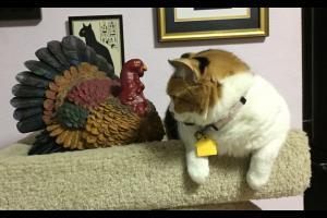 Sophee talks to Mr. Turkey